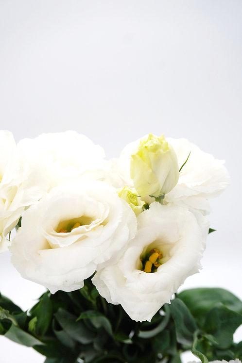 Lisianthus- White