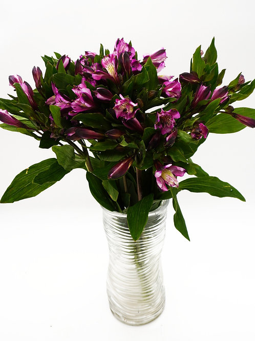 Alstroemeria- Purple