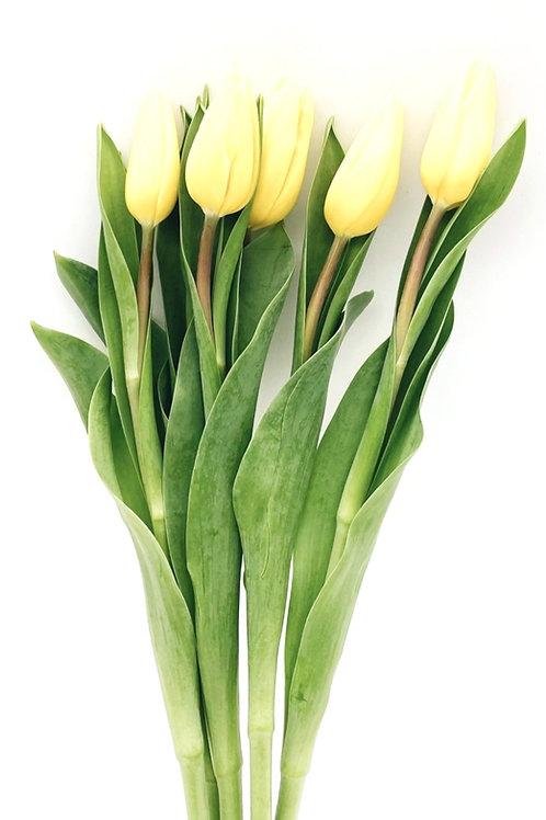 Tulip- Yellow