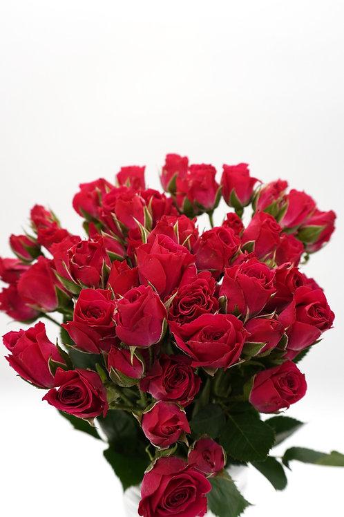 Spray Rose- Lovely Lidia (40 cm)