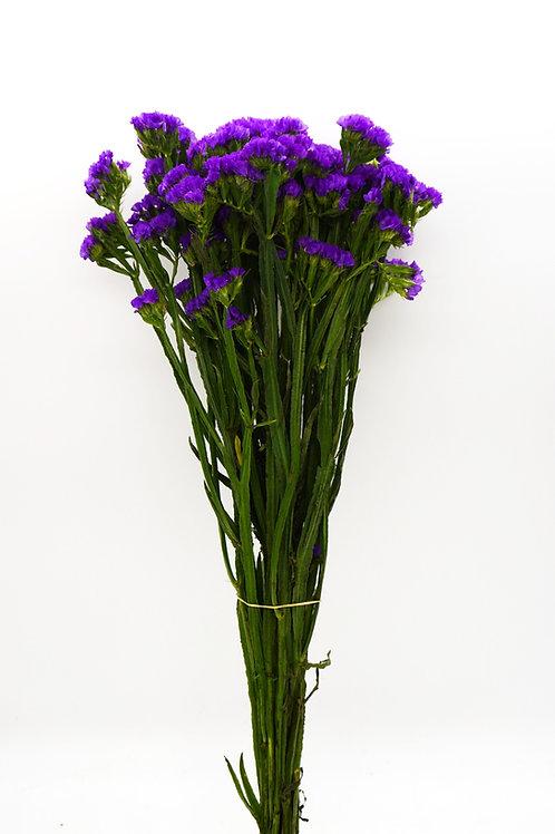 Statice- Purple