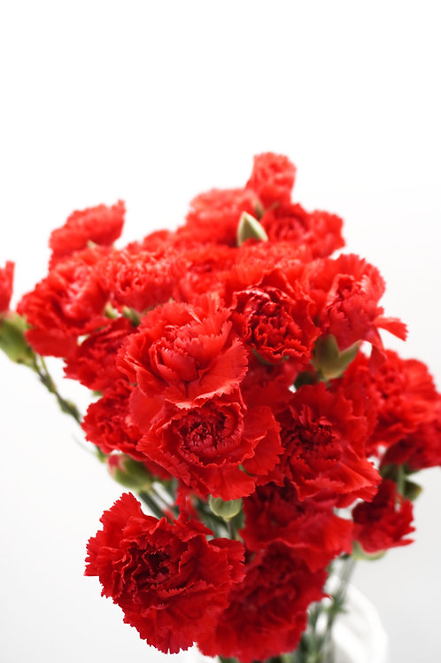 Mini Carnation- Red
