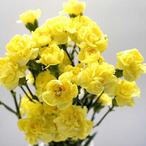 Mini Carnation- Yellow