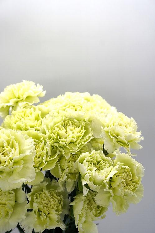 Carnation- Green