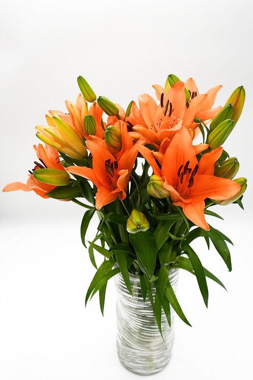 LA Hybrid Lilies- Orange