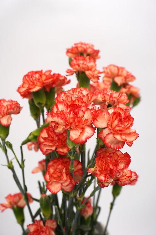Mini Carnation- Orange