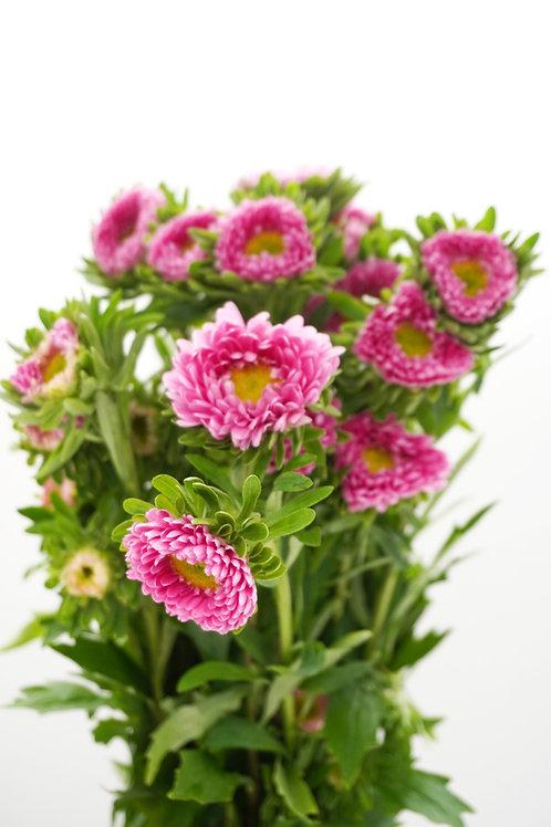 Matsumoto- Pink