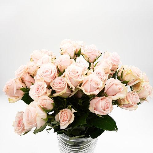 Spray Rose- Porcelina Pink