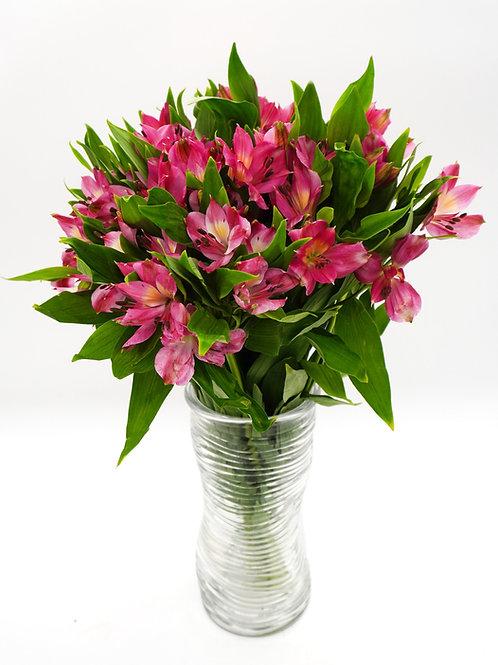Alstroemeria- Hot Pink