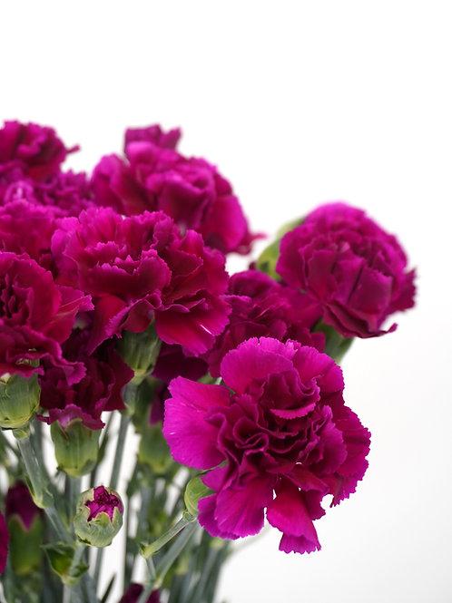 Mini Carnation- Magenta