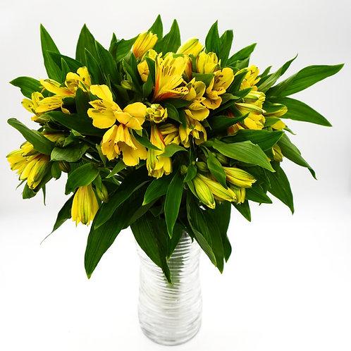 Alstroemeria- Yellow