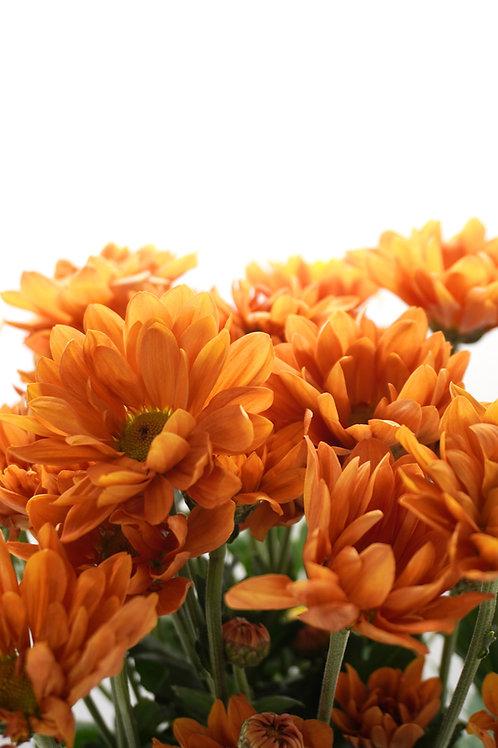 Daisy- Orange