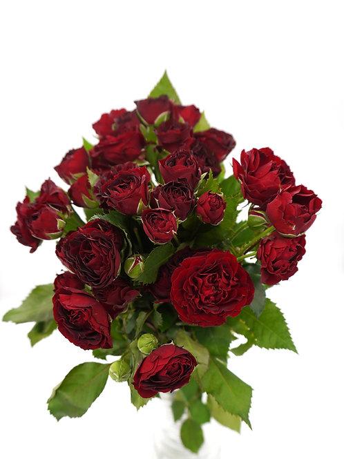 Spray Rose- Red Sensation (50 cm)