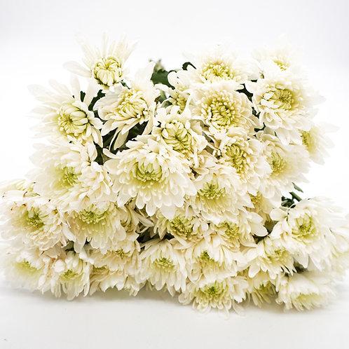 Cushion- White