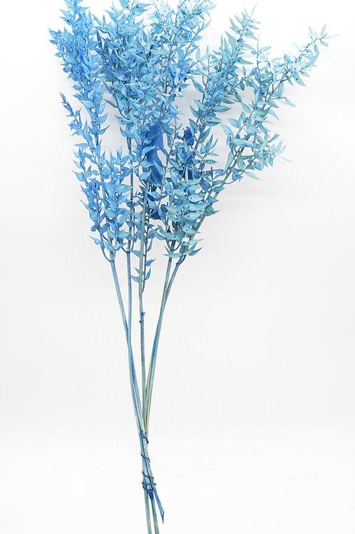 Italian Ruscus- Blue