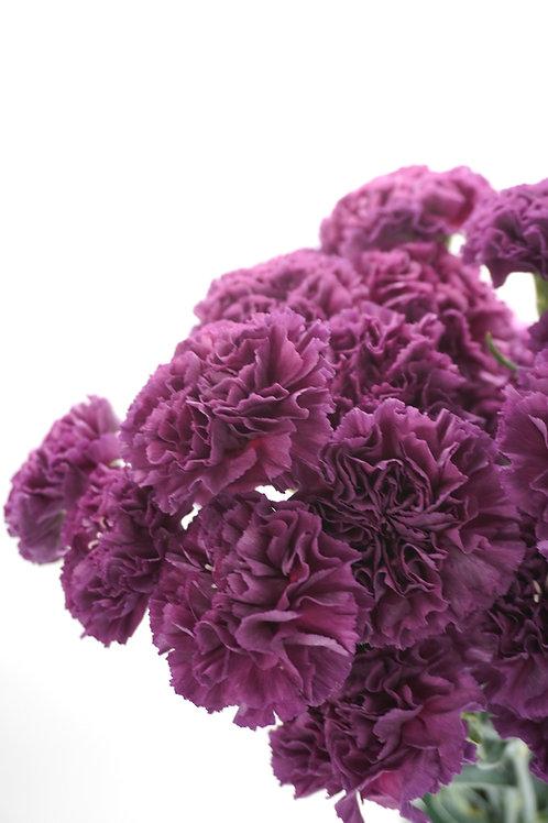 Antique Carnation- Cobalt