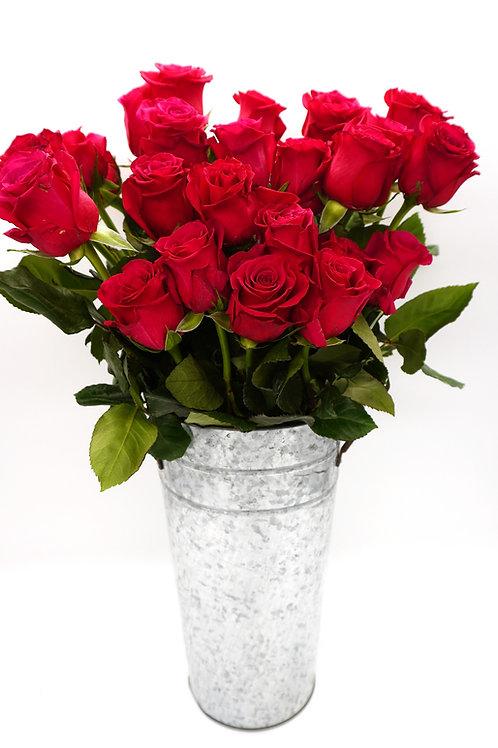 Roseberry (60 cm)