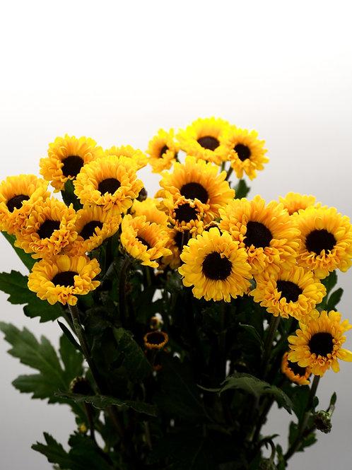 Daisy- Yellow Viking