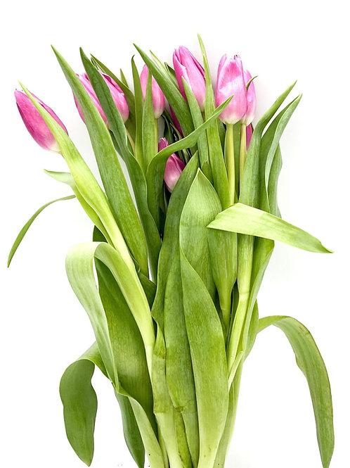 Tulip- Pink