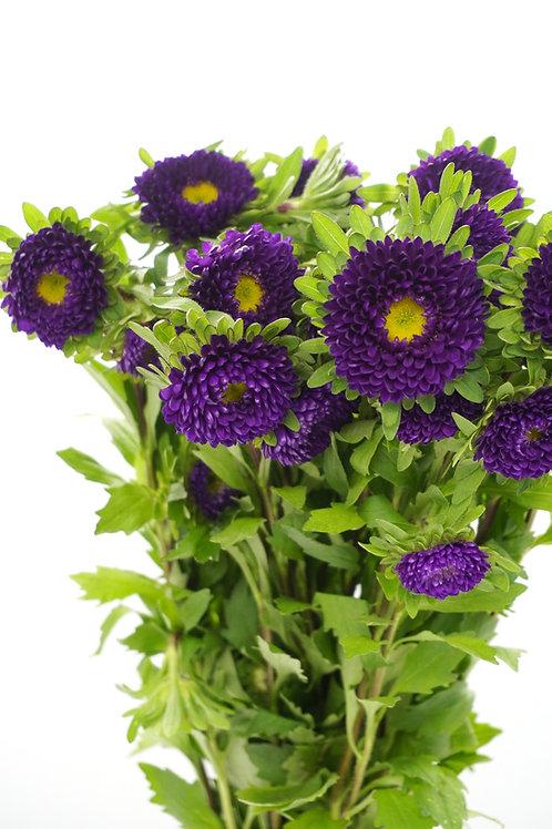 Matsumoto- Purple