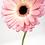 Thumbnail: Mini Gerbera- Pink