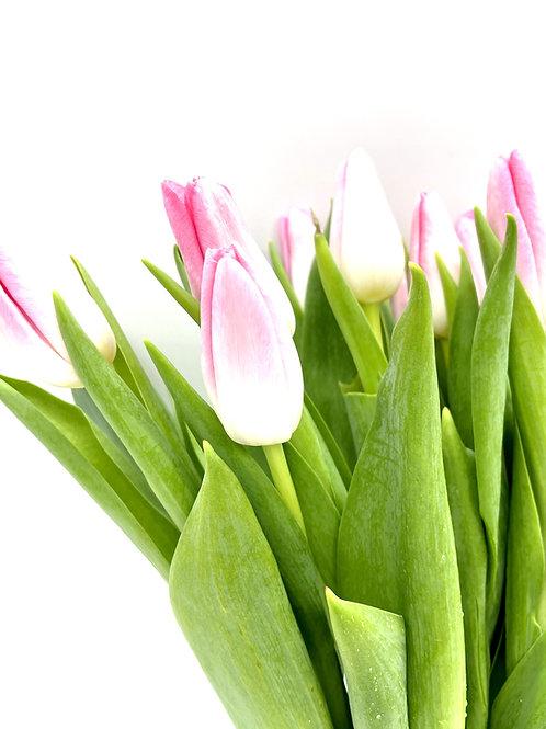 Tulip- Pink & White