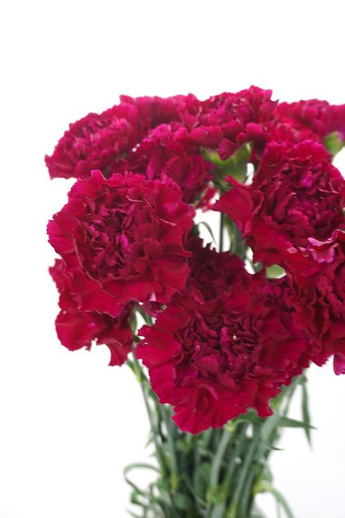 Carnation- Burgundy