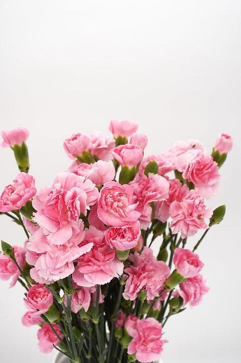 Mini Carnation- Pink