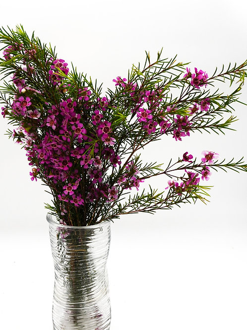 Wax- Fuchsia