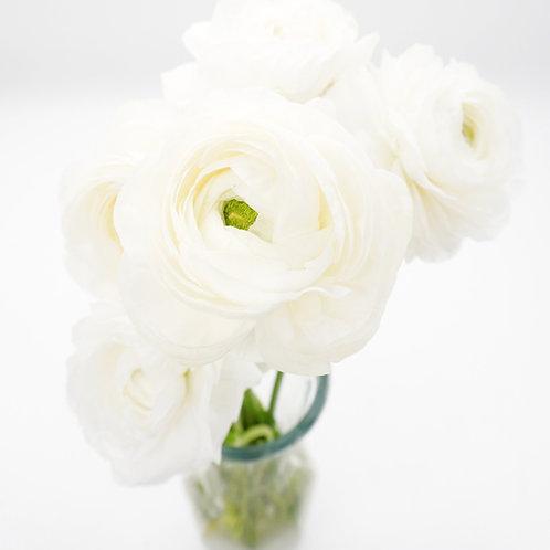 Ranunculus- White
