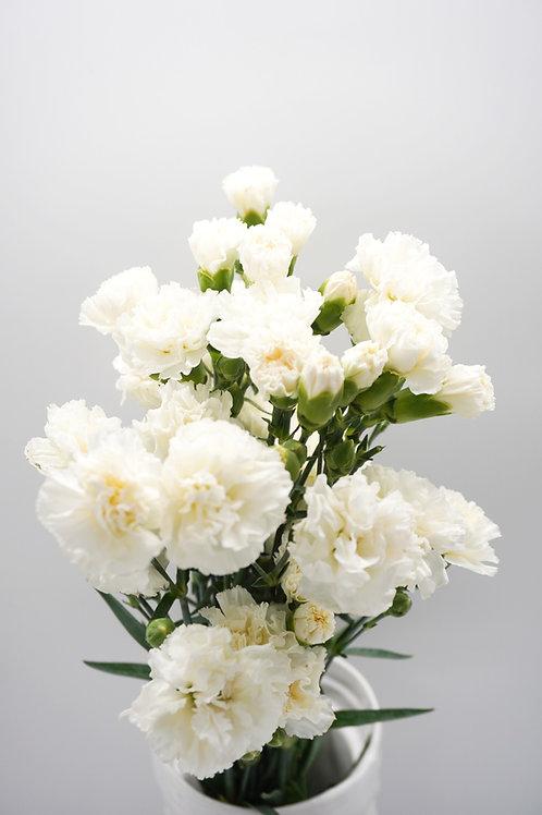 Mini Carnation- White