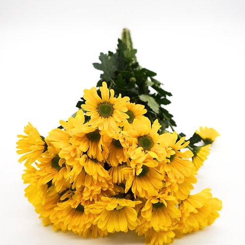 Daisy- Yellow