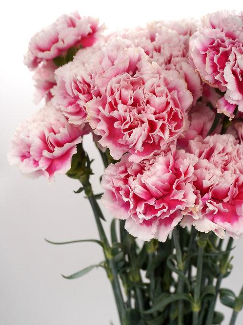 Antique Carnation- Pink