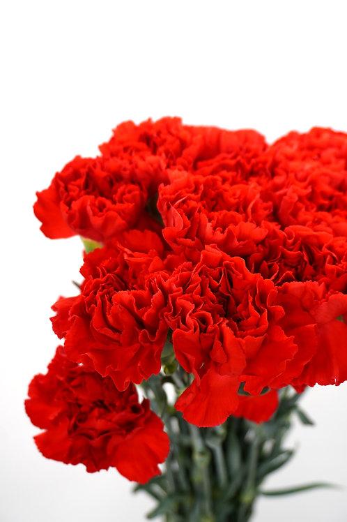 Carnation- Red