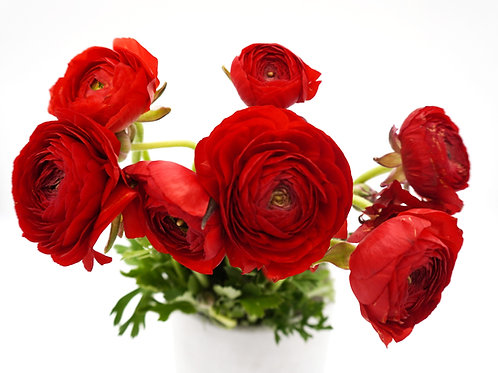 Ranunculus- Red