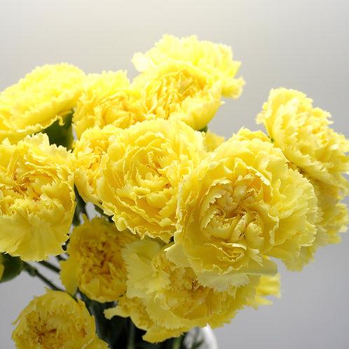 Carnation-Yellow