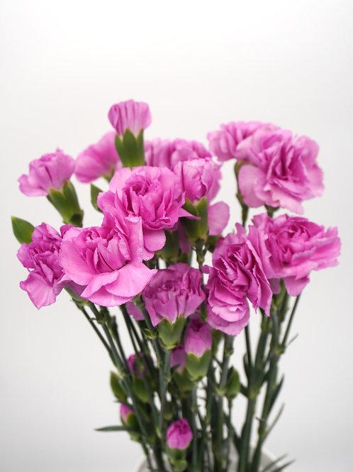 Mini Carnation- Lavender