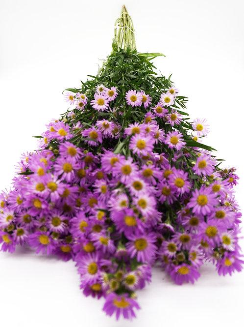 Novi- Lavender