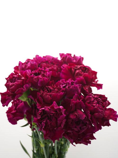 Carnation- Magenta