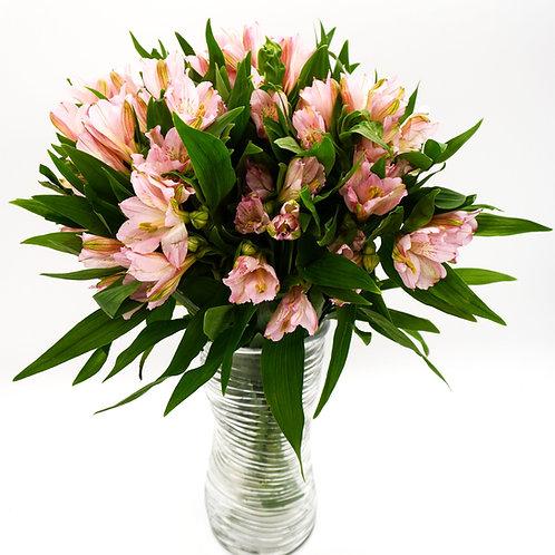 Alstroemeria- Pink