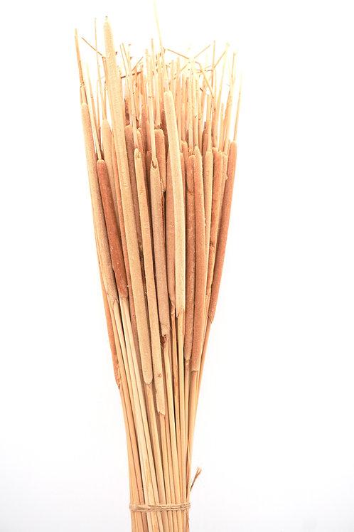 Pencil Cattail- Light