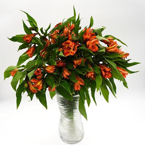 Alstroemeria- Orange