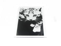 Gato Placa 29X27 c