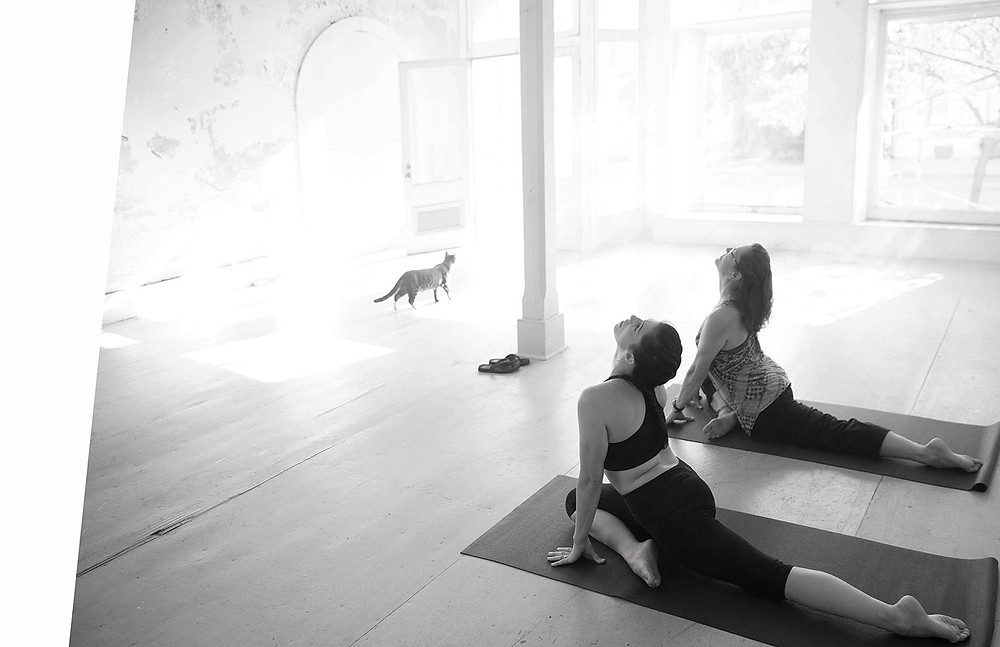 cat looks out large front windows as 2 women look up in yoga pose on mat in large open room with wooden floor