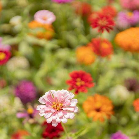 Miraculous Petals