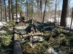 Progress #1 | Tree Removals
