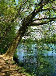 tree-254672_960_720.jpg