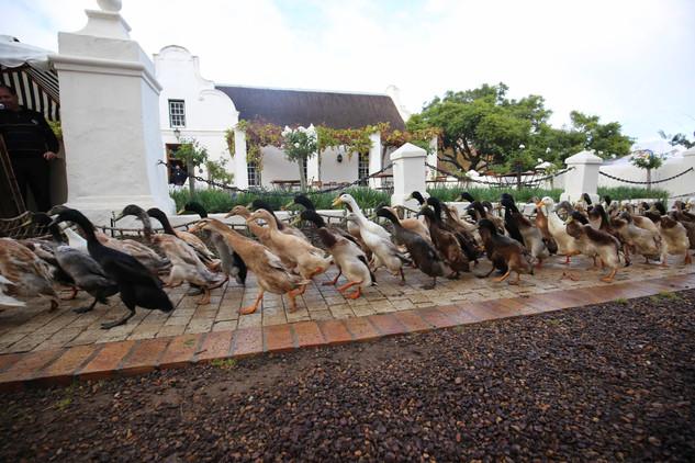 Duck Parade 2