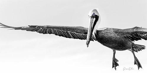 Pelican Air Show