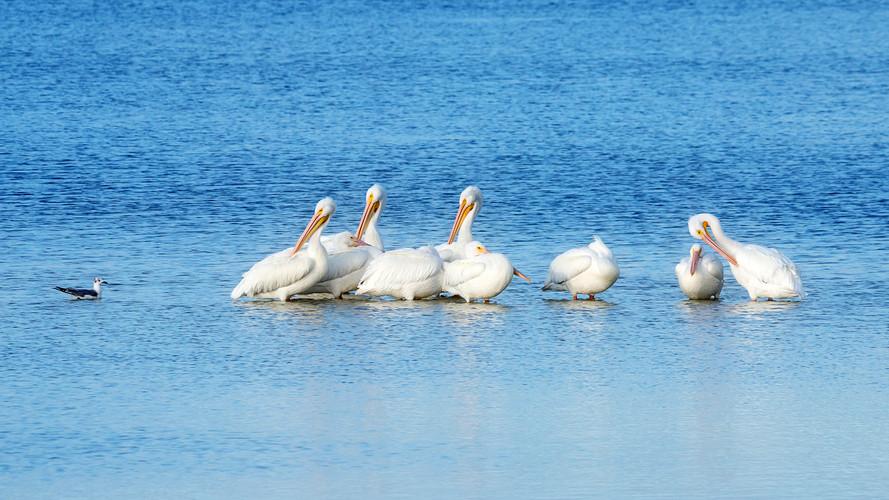 Pelican Games
